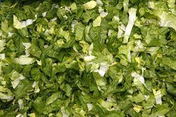 Salade iceberg