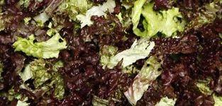 Frudelco - Donceel - Légumes découpés & transformés